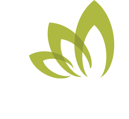 physical therapy summerville